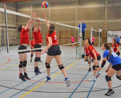 volleybal kontich